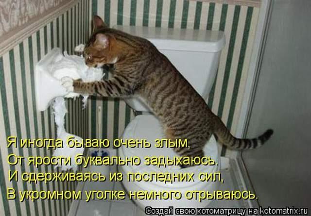 1435345562_kot9