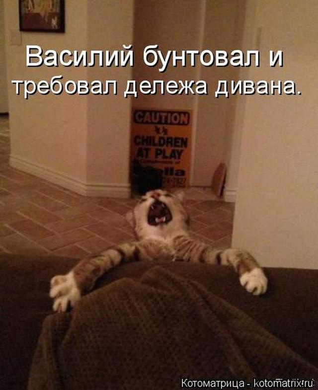 1435345577_kot