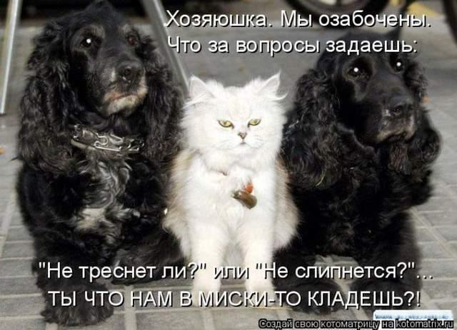 1435345577_kot6