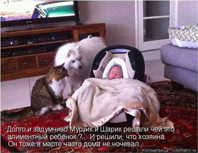 1435345607_kot2