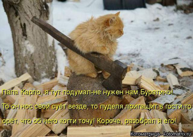 1435345636_kot10
