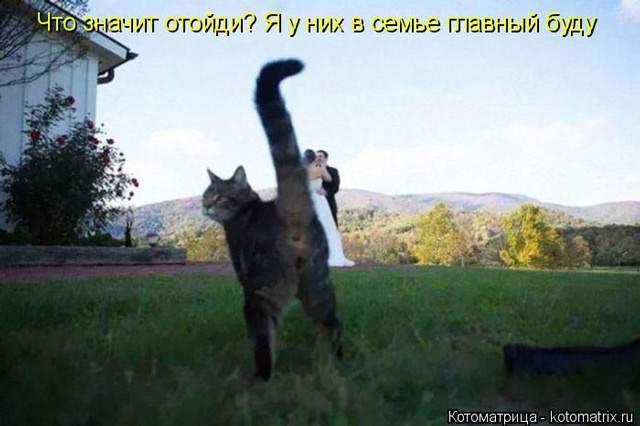 1435345641_kot5