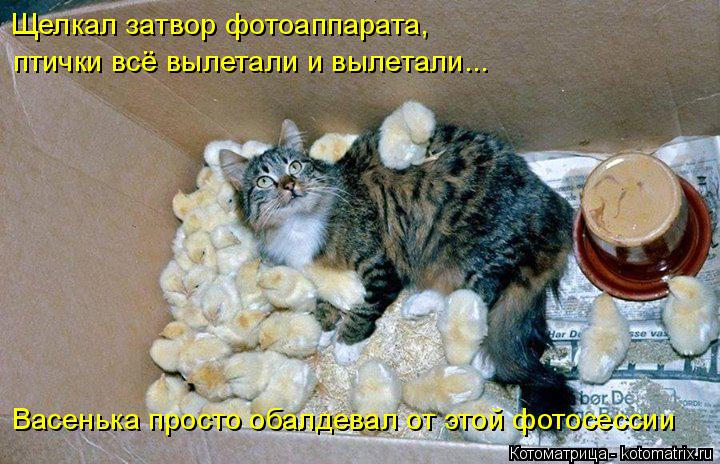 kotomatritsa_dP