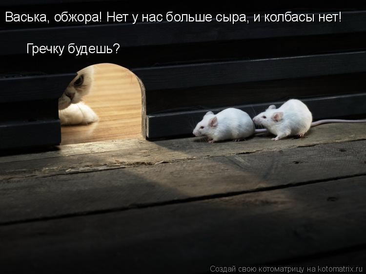 kotomatritsa_g