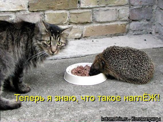 kotomatritsa_j_