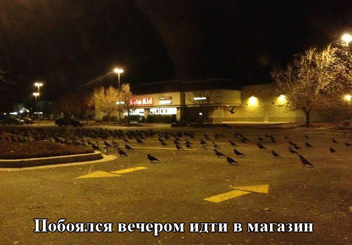 31_podborka_01