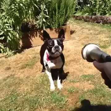 собака-против-шланга