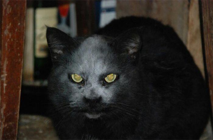 demon_cat_01