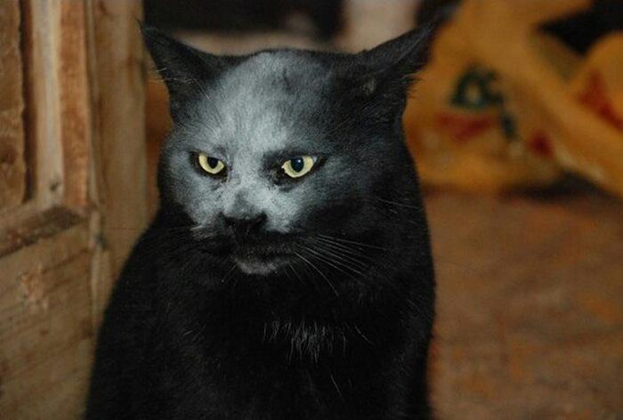 demon_cat_02