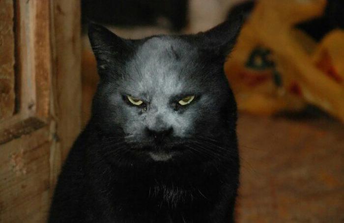 demon_cat_03