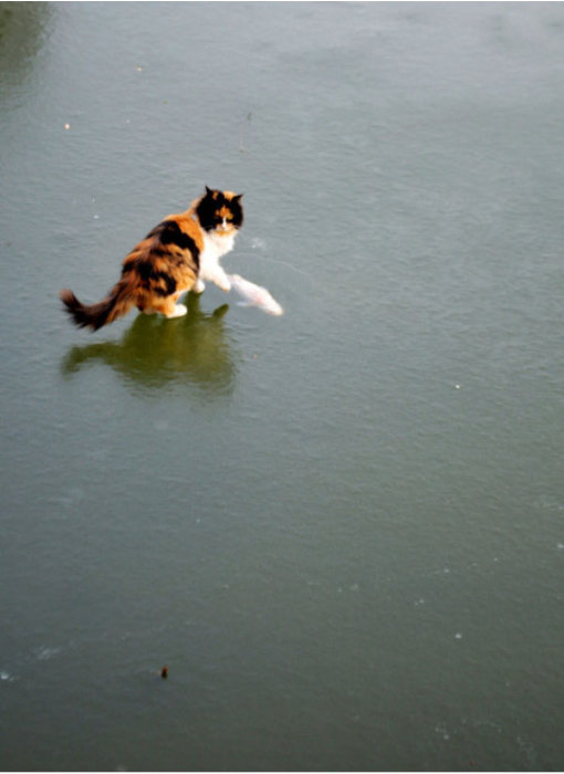 коты 09