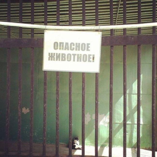 prikolnie_obiyavkeniya_38