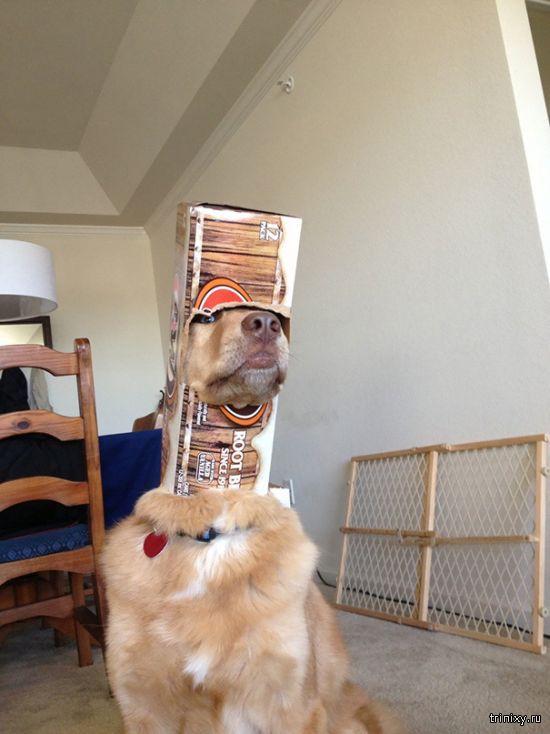 собачьи неудачи 19