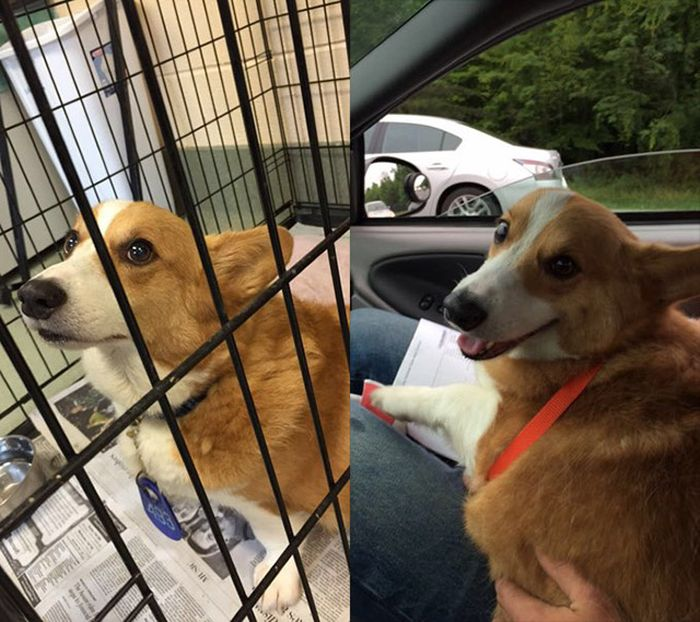 before_and_after_dog_10