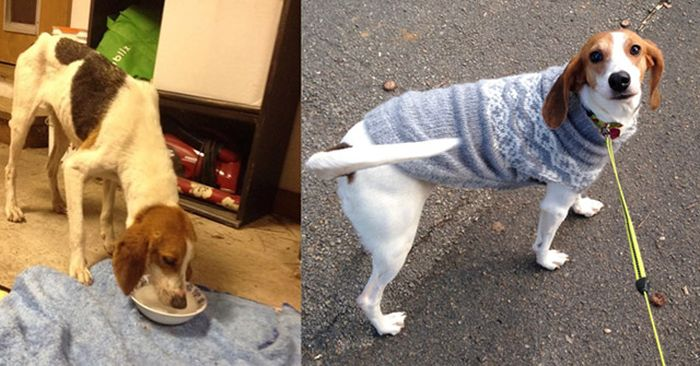 before_and_after_dog_13