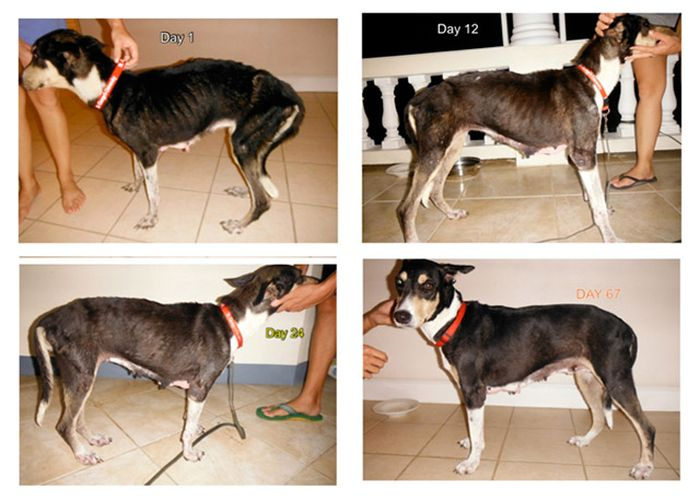 before_and_after_dog_14