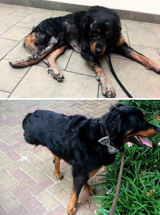 before_and_after_dog_17