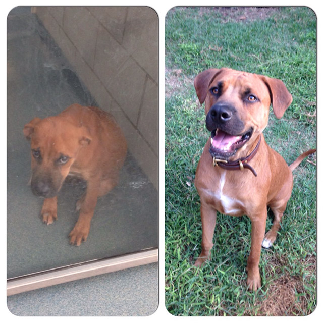 before_and_after_dog_18