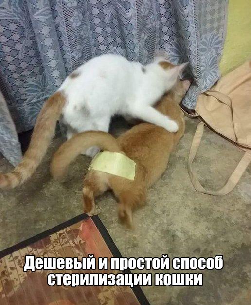 подборка 100
