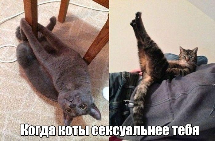 podborka_dnevnya_32