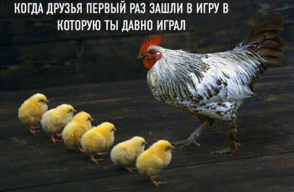 1470785525_podborka_dnevnya_15